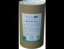 MINI-GUEPES MG XL
